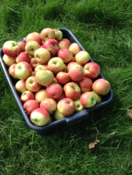 applwharvest2015