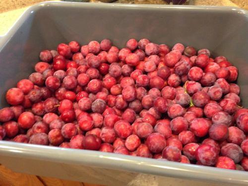 plums 2015