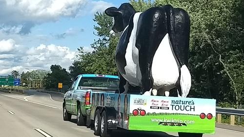 kwik trip cow