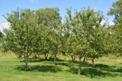Home Fruit Orchard