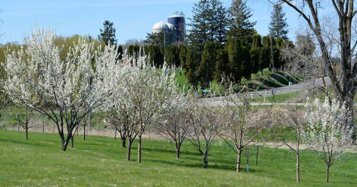 cropped-fruit-trees.jpg