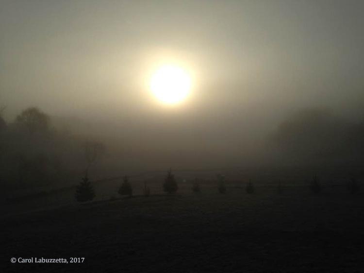 wmSpring 17 sunrise fog