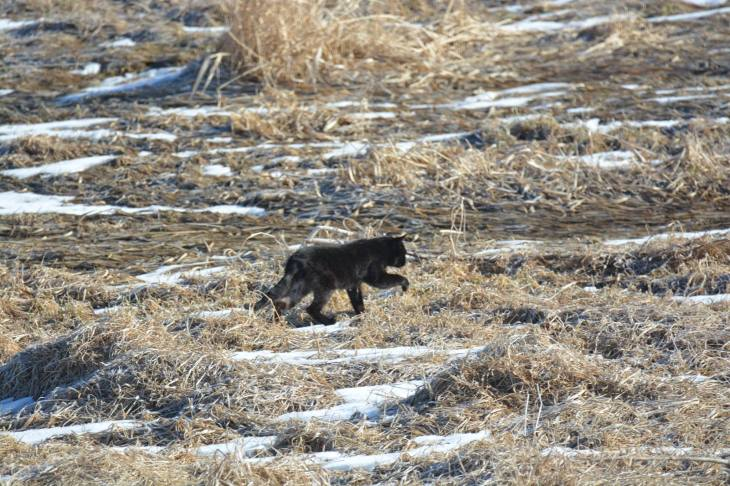 cougarinthecoulee3:14:18