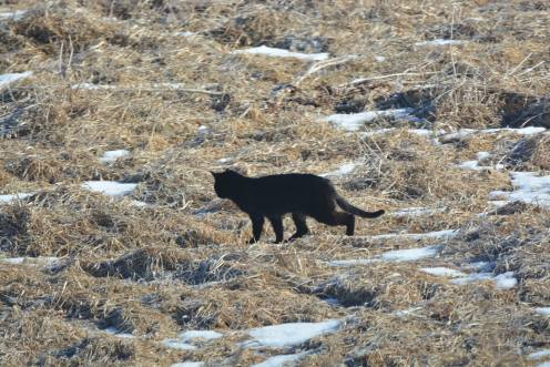cougarinthecoulee5