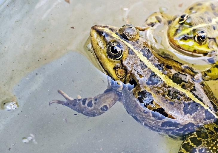 frog-1367440_1920