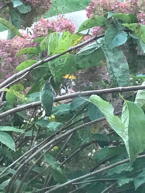 hummingbirdcamophlagelookout2