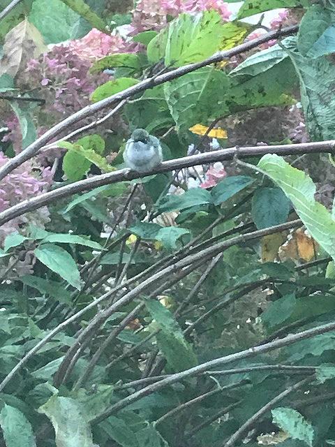 hummingbirdcloseup2