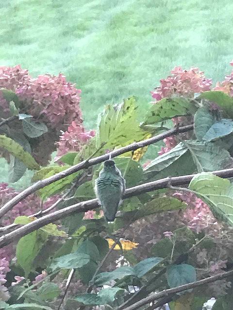 Hummingbirdlookout