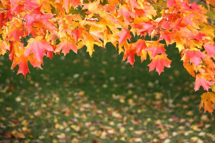 leaves-178652_1920