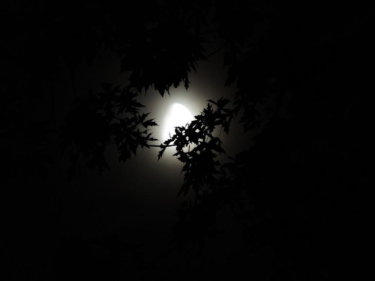 moonlight-through-trees-1616303_1920