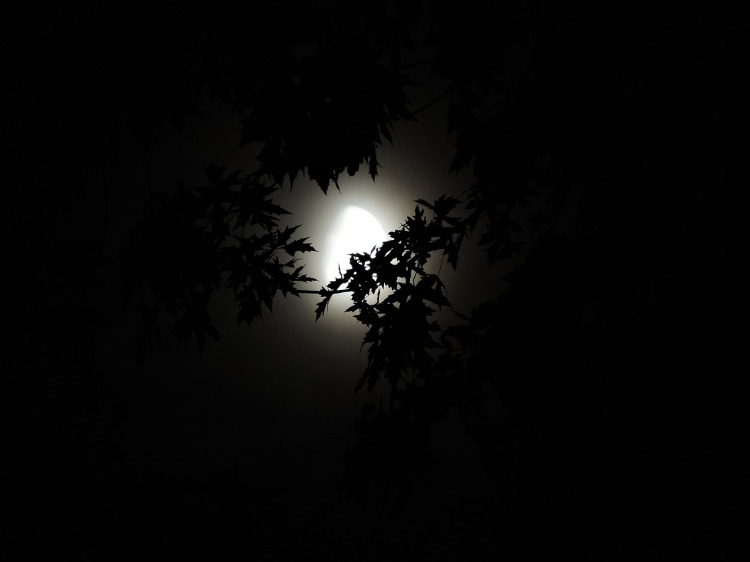 moonlight-through-trees-1616303_1920