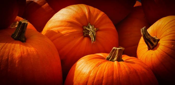 pumpkins-3726919_1920