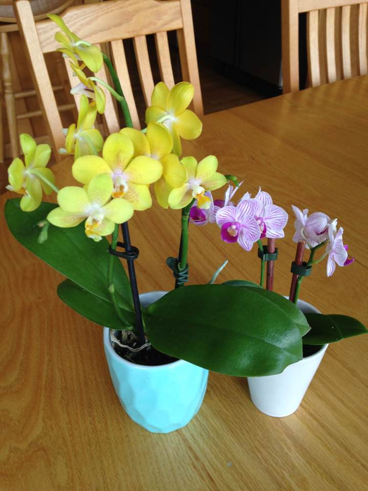 New Orchids May-June17