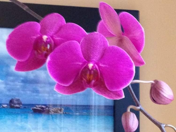 orchidsmulti417