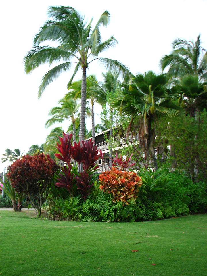 tropicalvibrancy