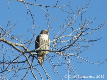 Hawk2019