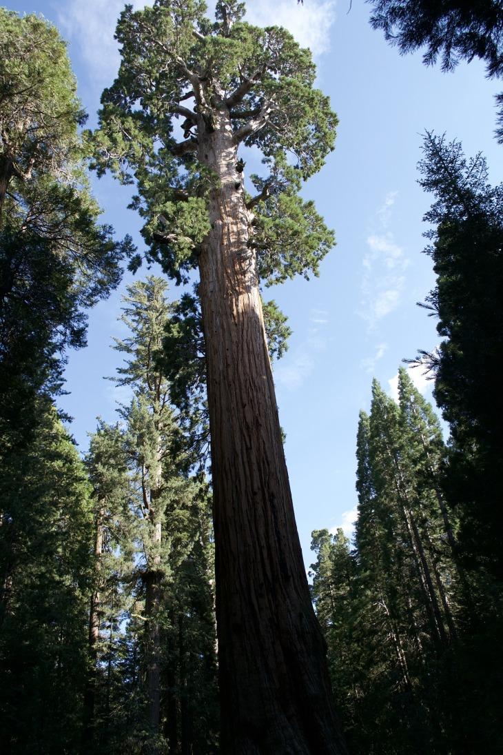 california-3675731_1920