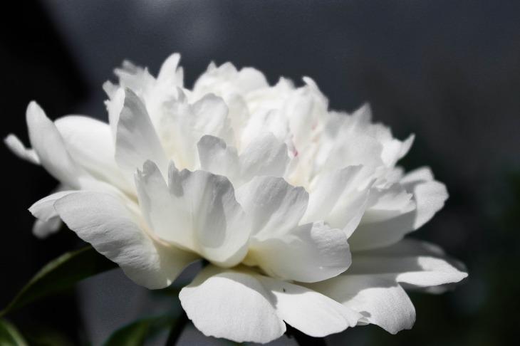 flowers-734657_1920