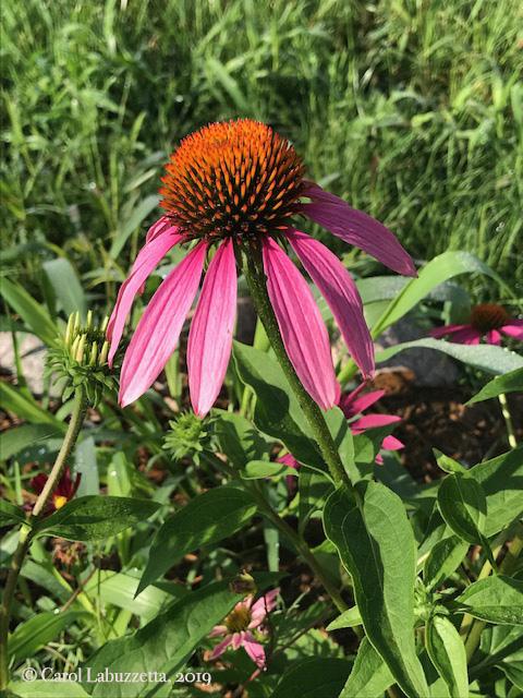 PurpleConflower5826