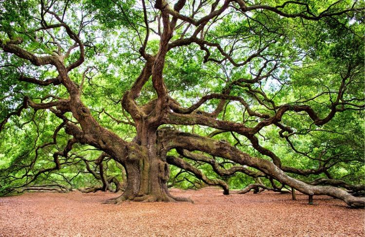 oak-tree-2018822_1920 (1).jpg