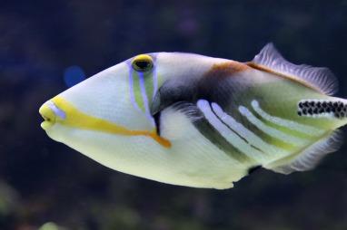 triggerfish-4075542_1920
