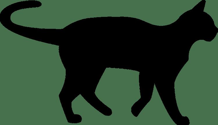cat-1185453_1280.png