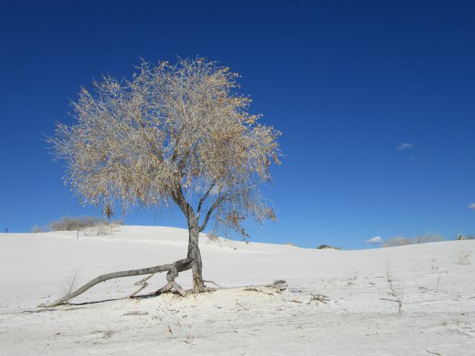 mywhitesandstree