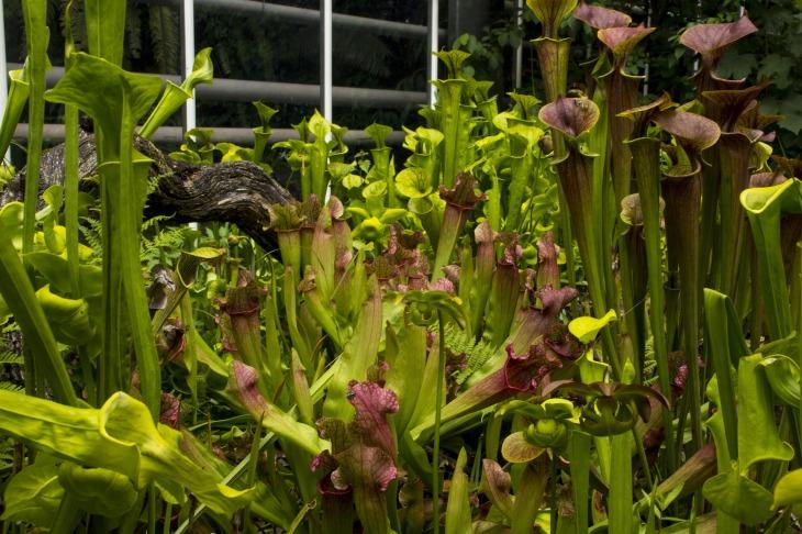 garden-3217124_1920